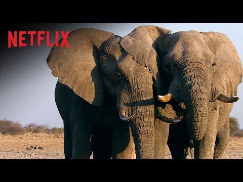 The Ivory Game | Das Elfenbein-Komplott – Offizieller Trailer – Netflix Dokumentation [HD]