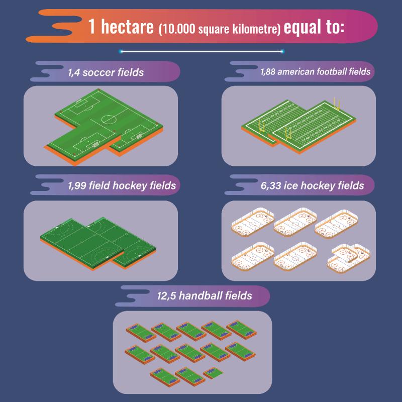 Schaubild Vergleich Hektar