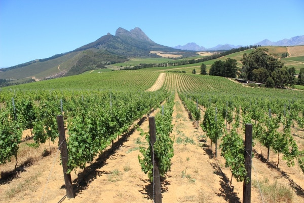 Weinberge In Südafrika
