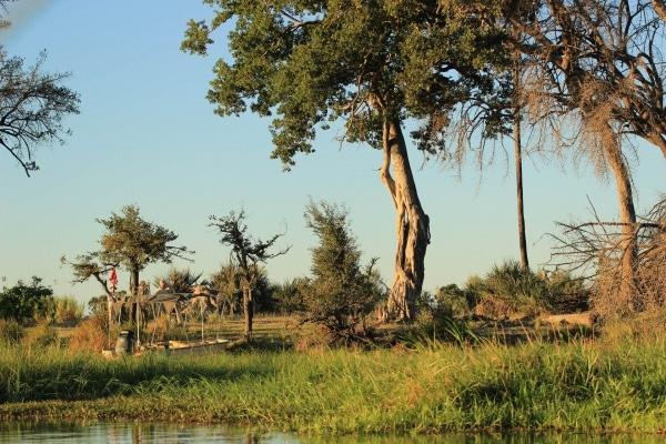 Botswana Chiefs Island Wanderung
