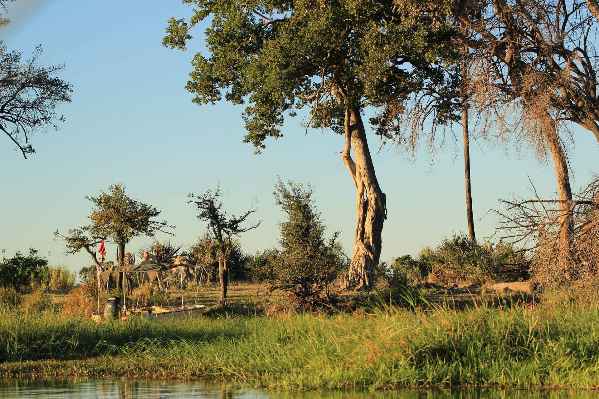Chiefs Island Safari Zu Fuß