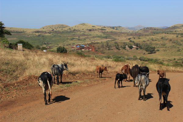 Blick Auf Ein Dorf In Der Zululand Region
