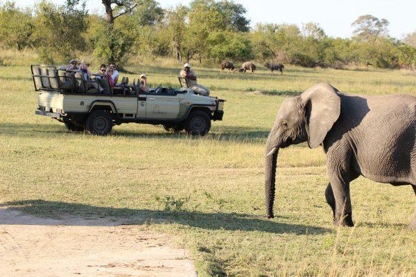 Elefanten Safari Im Offenen Jeep
