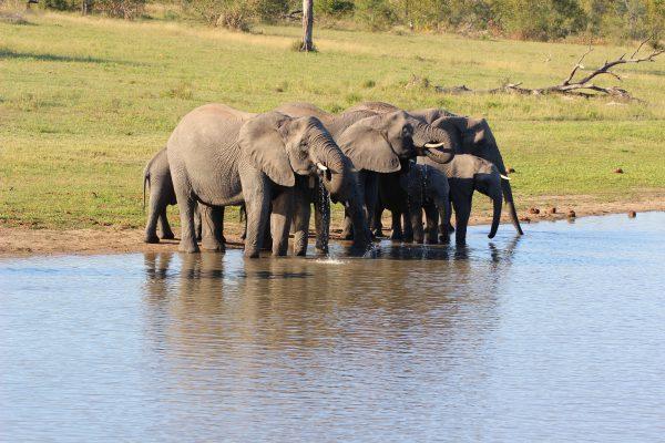 Elefantenfamilie Am Wasserloch Im Sabi Sand Nationalpark