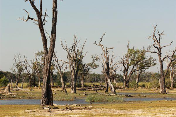 Vertrocknete Bäume - Moreme Game Reserve Landschaft