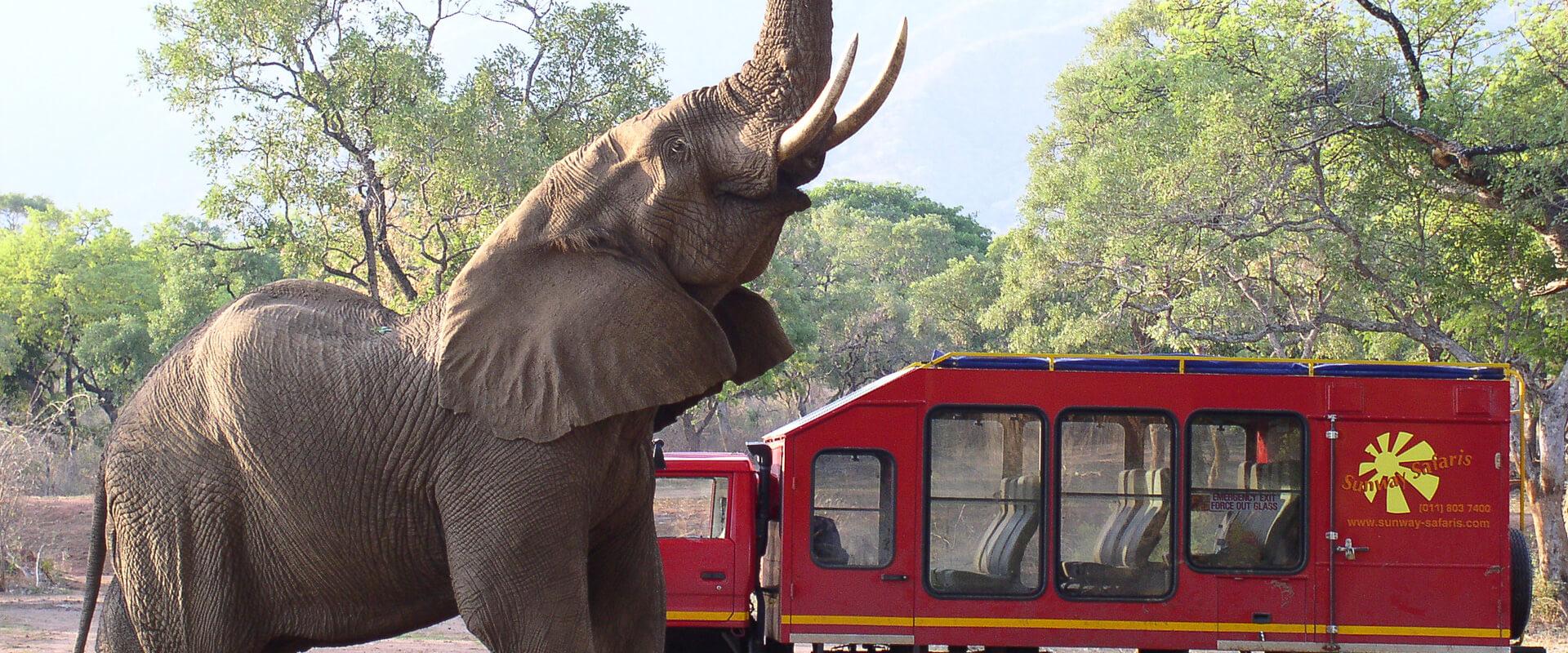 overland-safaris-botswana-fahrzeug