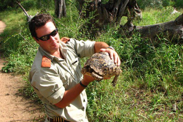 Schildkröte Versteckt Sich Im Panzer
