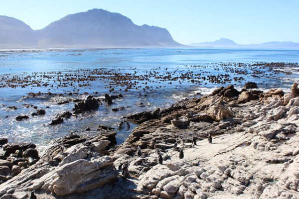 Suedafrika Bettysbay Pinguinkolonie