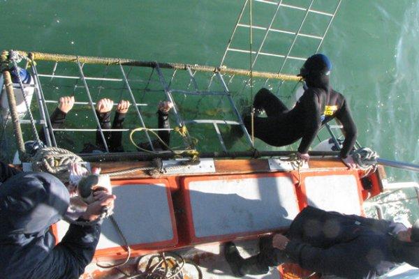 Den Hai-Käfig Betreten