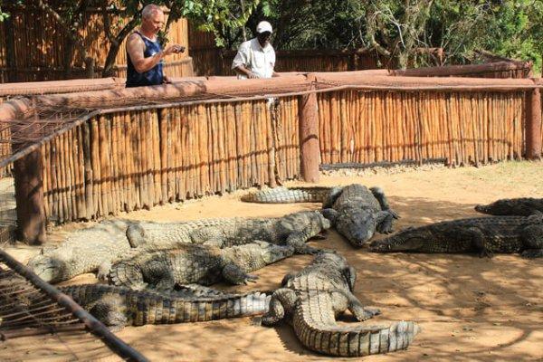 Zulu Croc