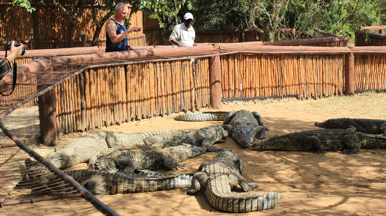 Suedafrika Hluhluwe Krokodilprojekt