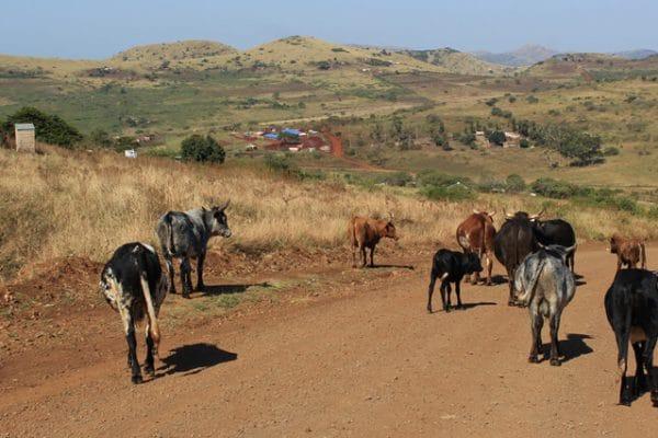 Suedafrika Hluhluwe Zululandschaft