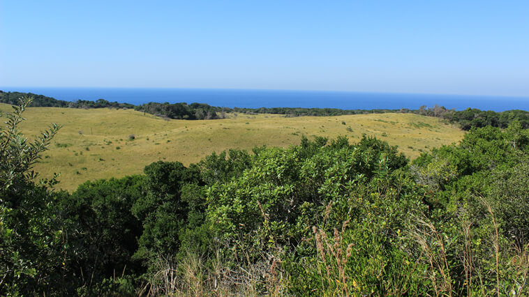 suedafrika-isimangaliso-wetlands-park-meerblick