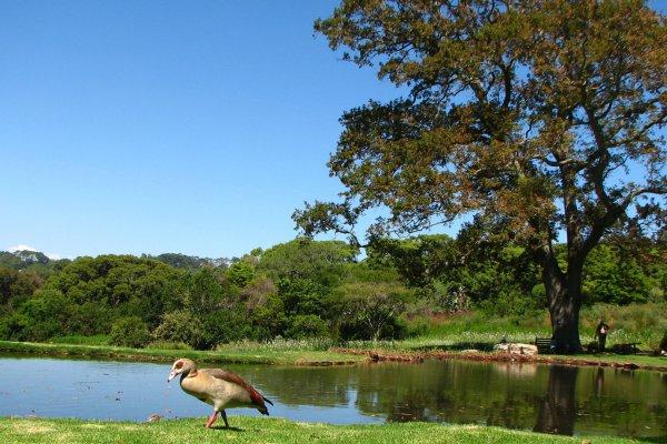 Suedafrika-kapstadt-kirstenbosch-botanical-garden