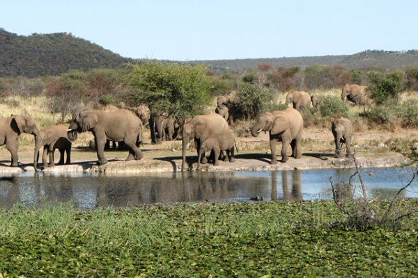 Madikwe Safaris