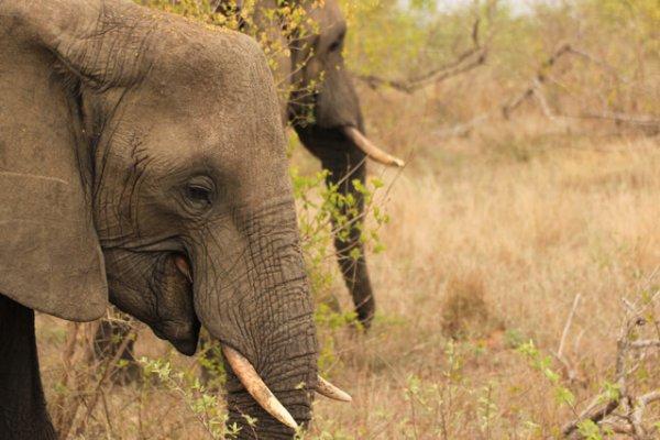 Suedafrika-sabi-sand-elefant