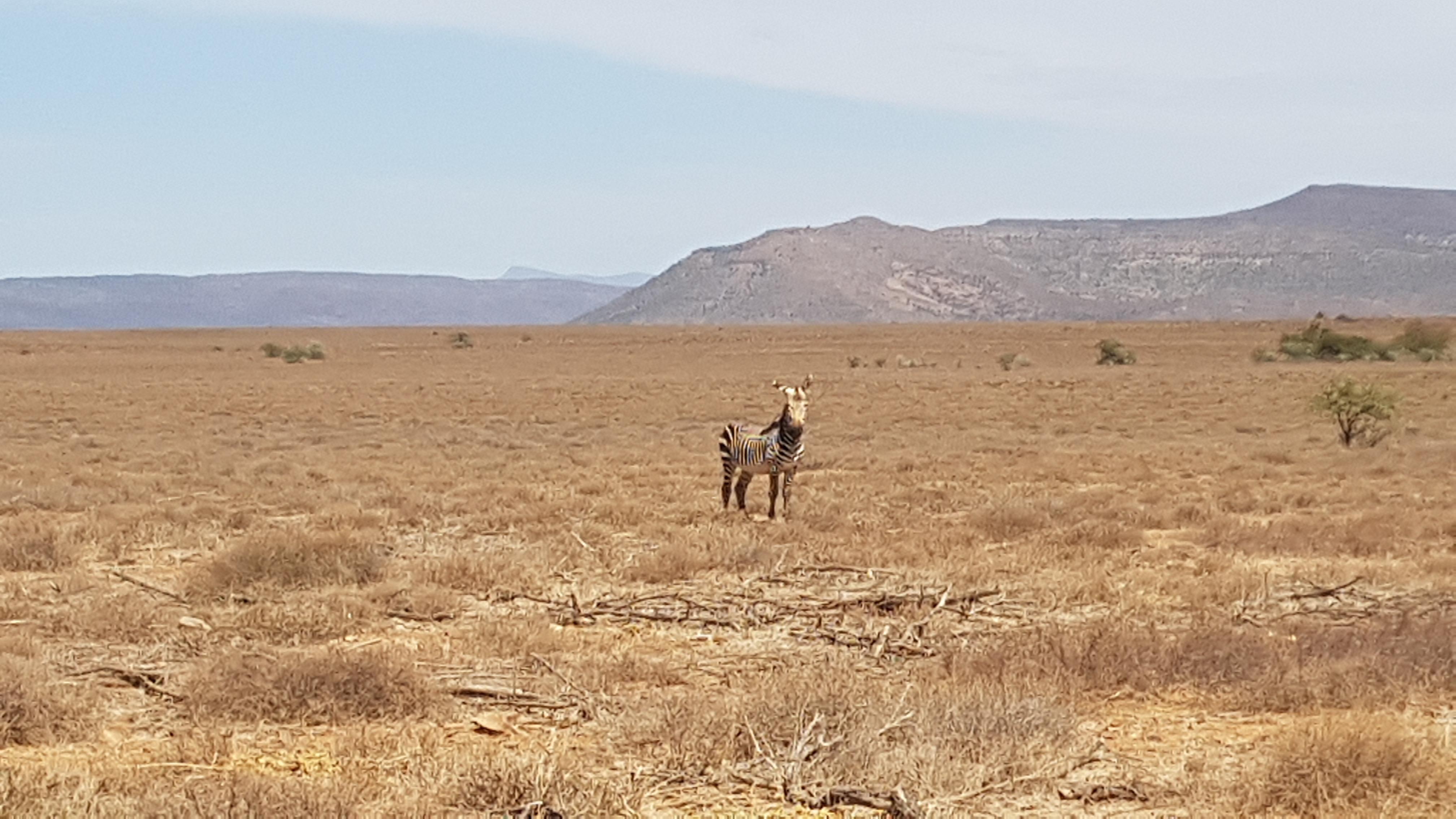 Garden Route & Karoo