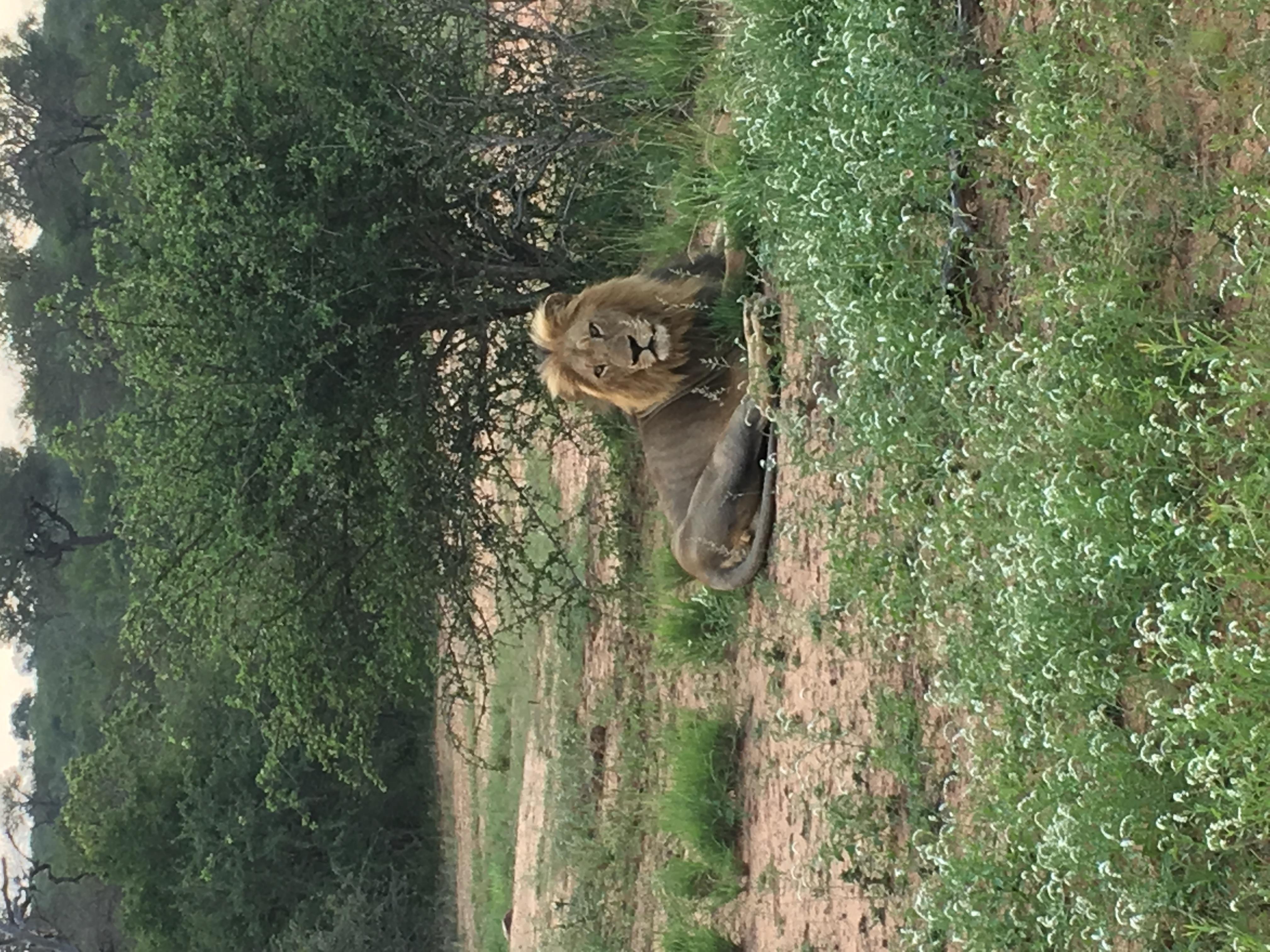 Mietwagenreise Kruger & Garden Route