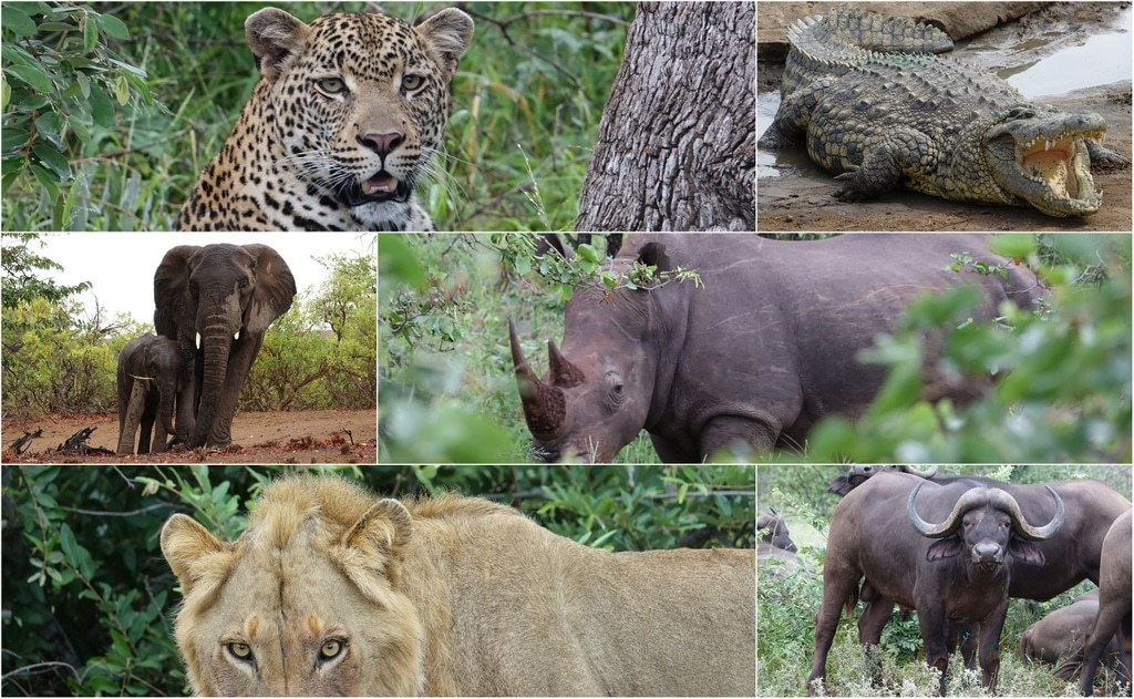 Collage Der Big Five Von Afrika Inkl. Krokodil