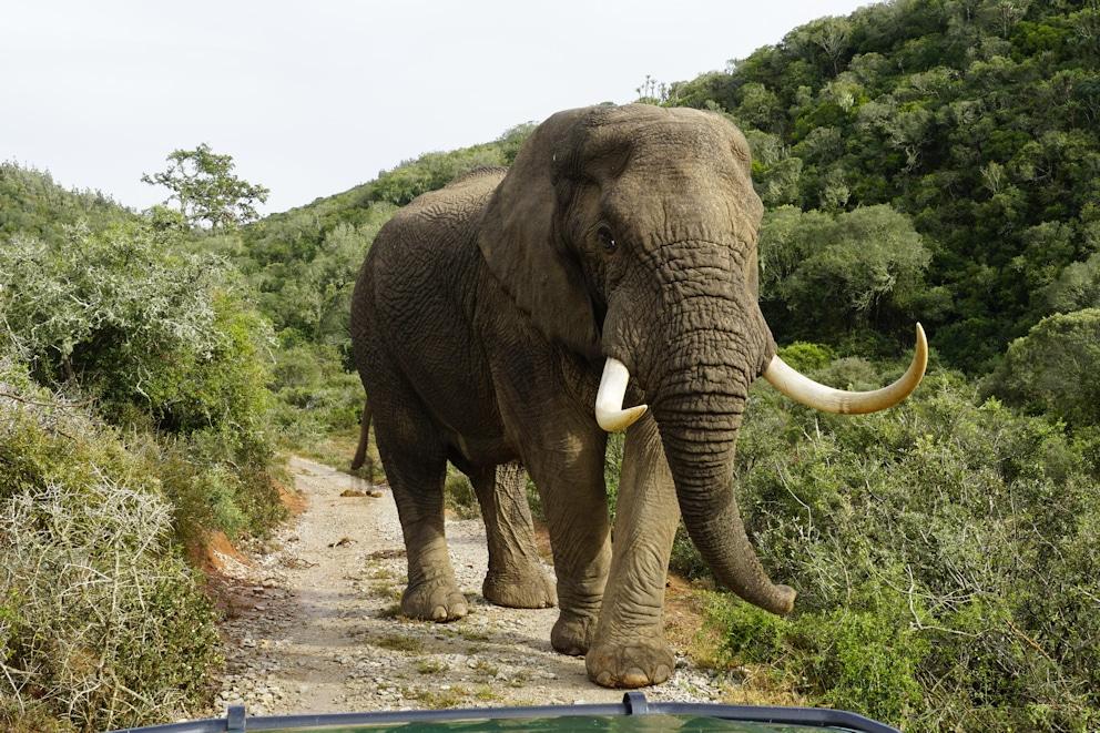 Garden Route Und Karoo Mietwagenreise