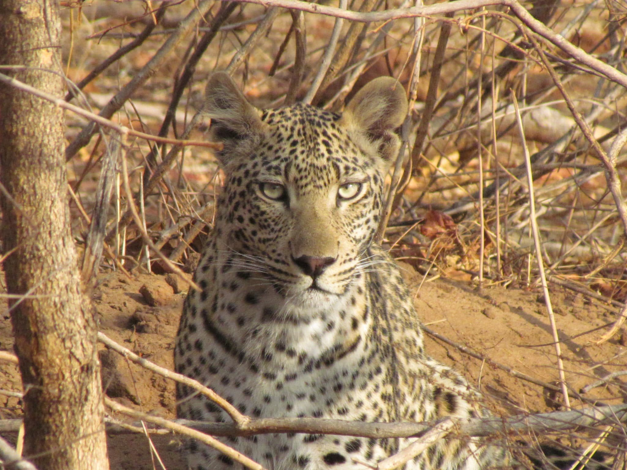 Botswana Highlights