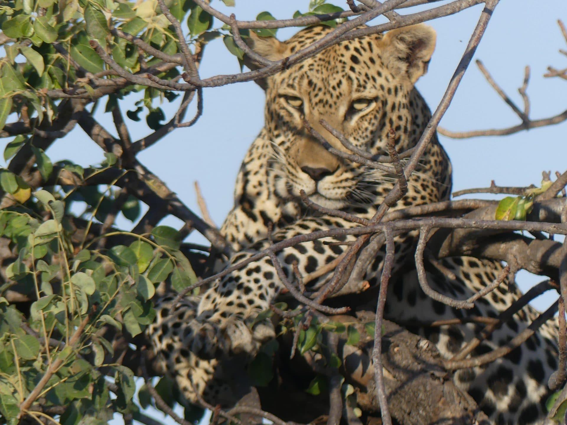 Südafrika, Panoramaroute, Safari