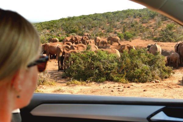 Suedafrika-Hochzeitsreise-Feedback