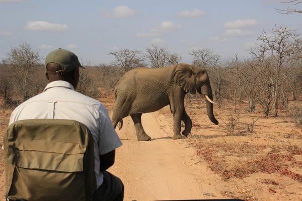 Elefant Vor Ranger