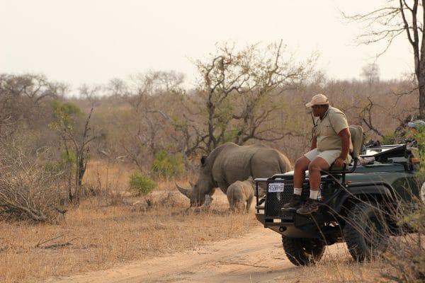 Nashörner Auf Safari