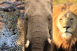 Safari in afrika welche safari art passt zu mir oder welche