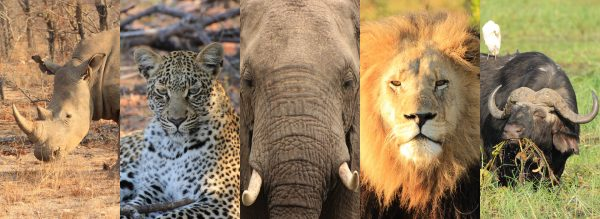 Big Five Afrika Collage