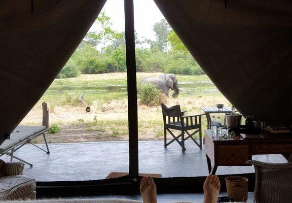Hotelzelt-Ausblick Auf Elefanten