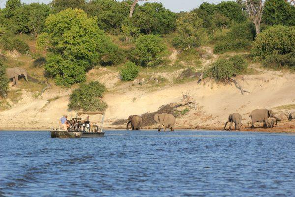 Fotosafari Elefante Vom Wasser
