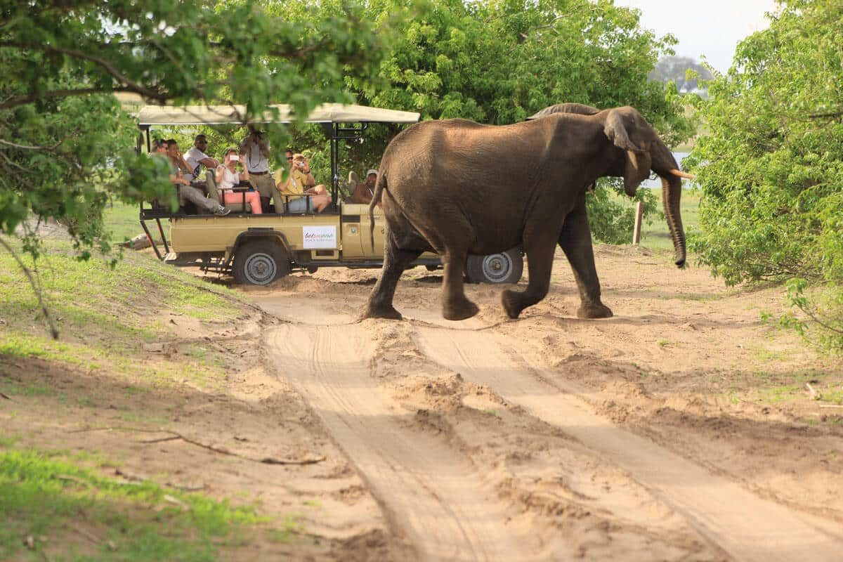 Elefanten auf Safari im Chobe National Park