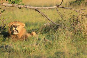 Botswana Flugsafari Botswana Focus Feature Image