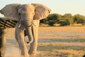 Botswana Flugsafari Desert Delta Feature Image