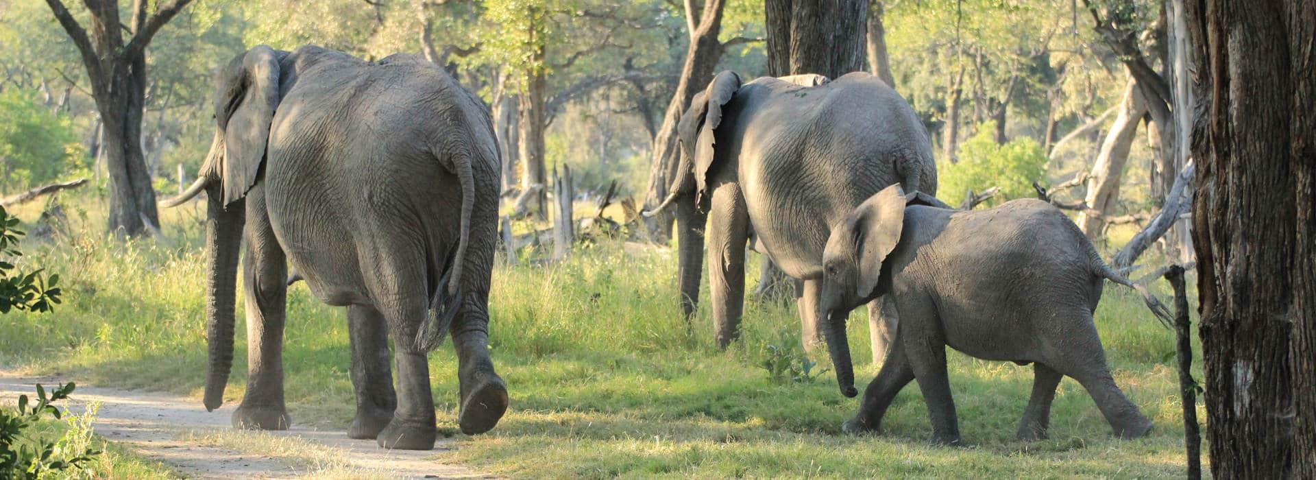 Elefanten im Moreme Game Reserve