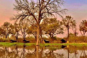 Botswana Moremi Game Reserve Khwai Tended Camp