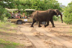 Botswana Moremi Mietwagenreise Feature Image