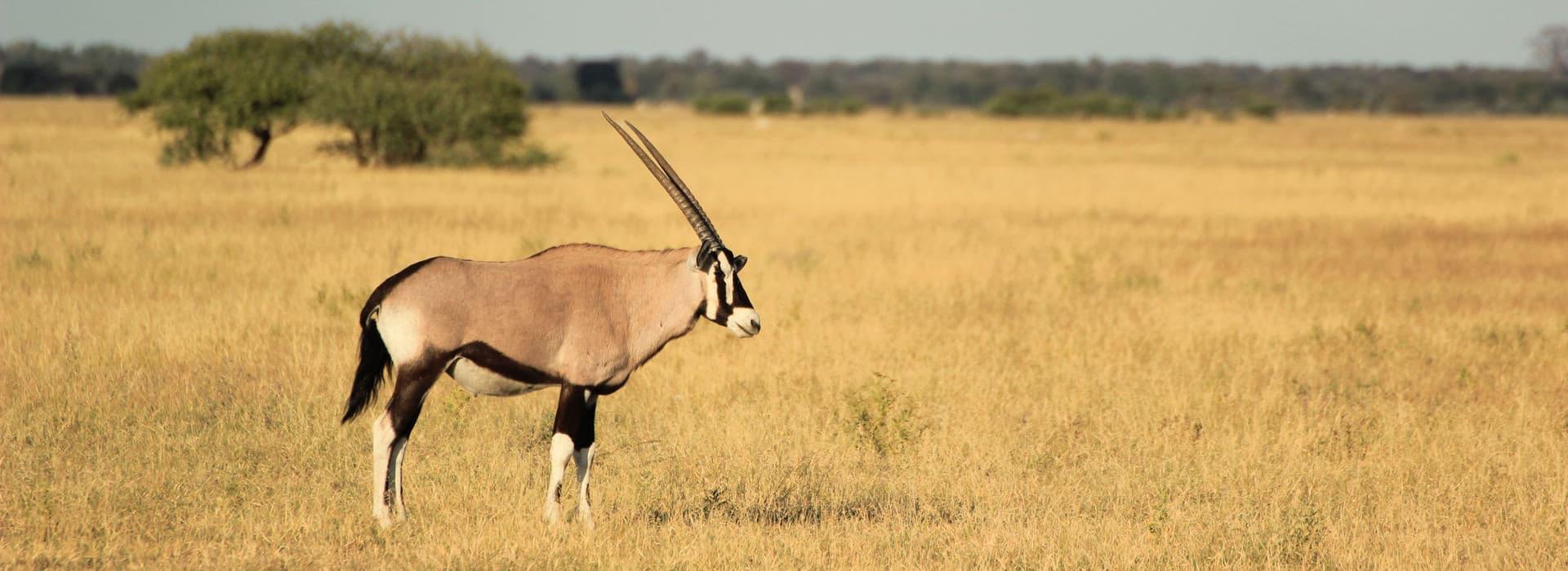 Makgadikgadi & Nxai Pan National Park