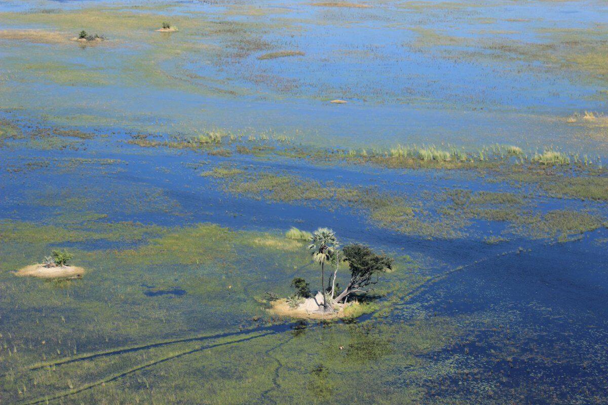 Baum Auf Insel Im Okavango Delta