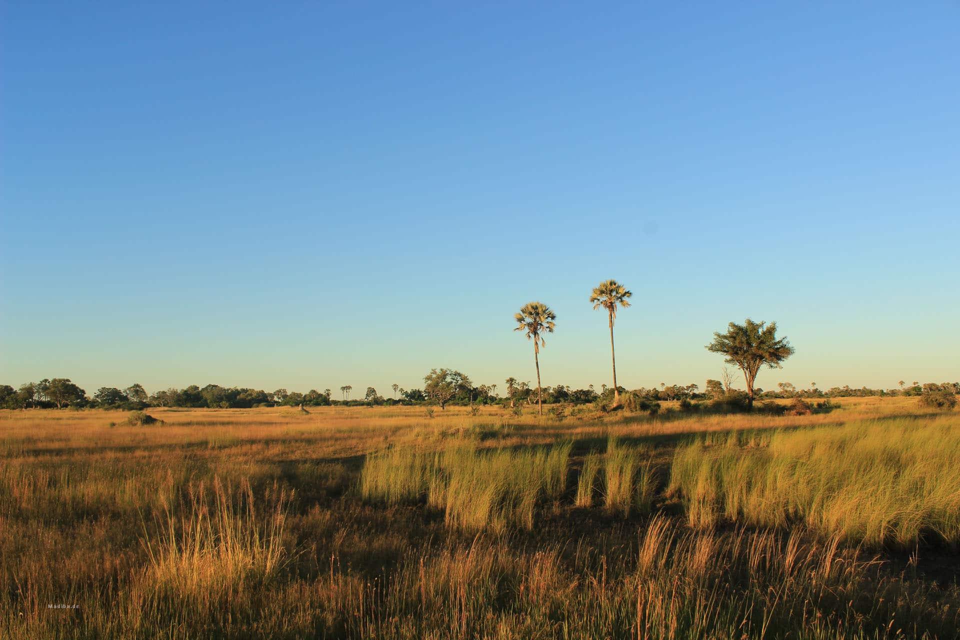 Okavango Delta Chiefs Island Landschaft