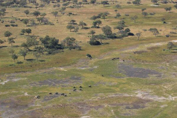 Elefantenherde Aus Dem Flugzeug Fotografiert