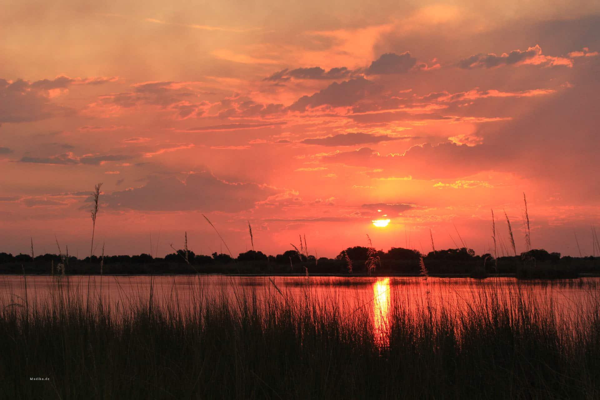 Sonnenuntergang Im Okavango Delta