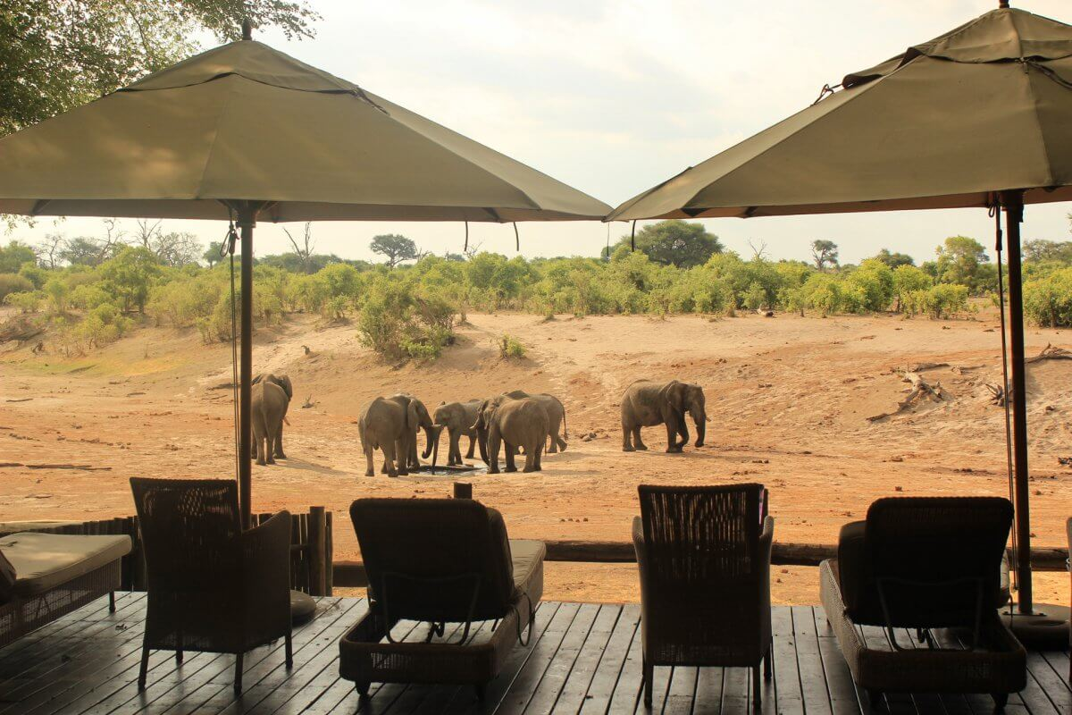 Savute Elefanten am Wasserloch