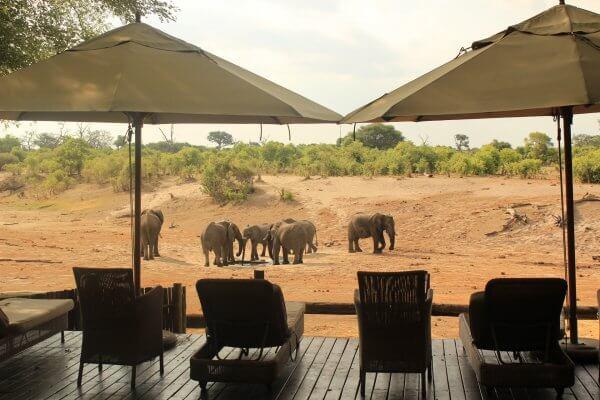Botswana Savute Elefanten Am Wasserloch