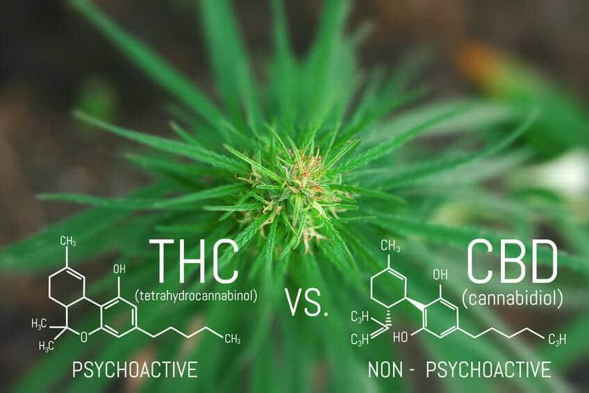 chemische STruktur THC CBD
