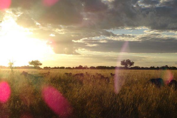 Sonnenuntergang Und Zebras