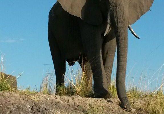 Elefant Vor Blauem Himmel