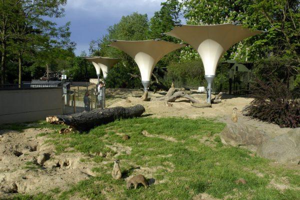 Erdmännchenanlage Im Kölner Zoo